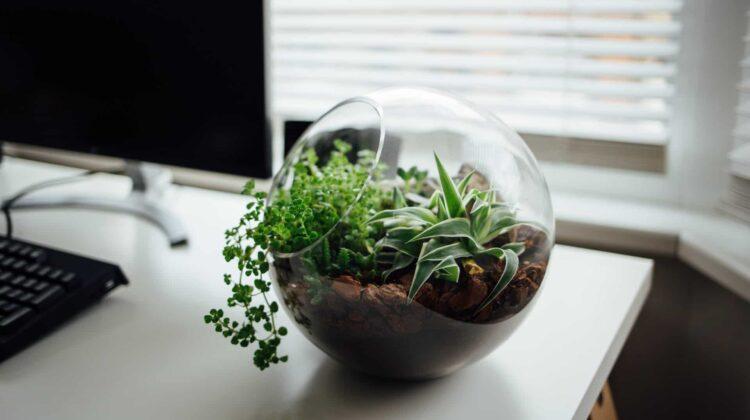 come rendere l'ufficio ecologico